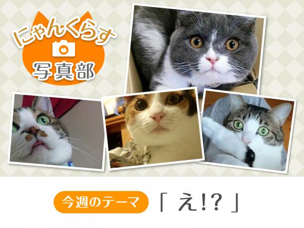 写真部バナー_え!?