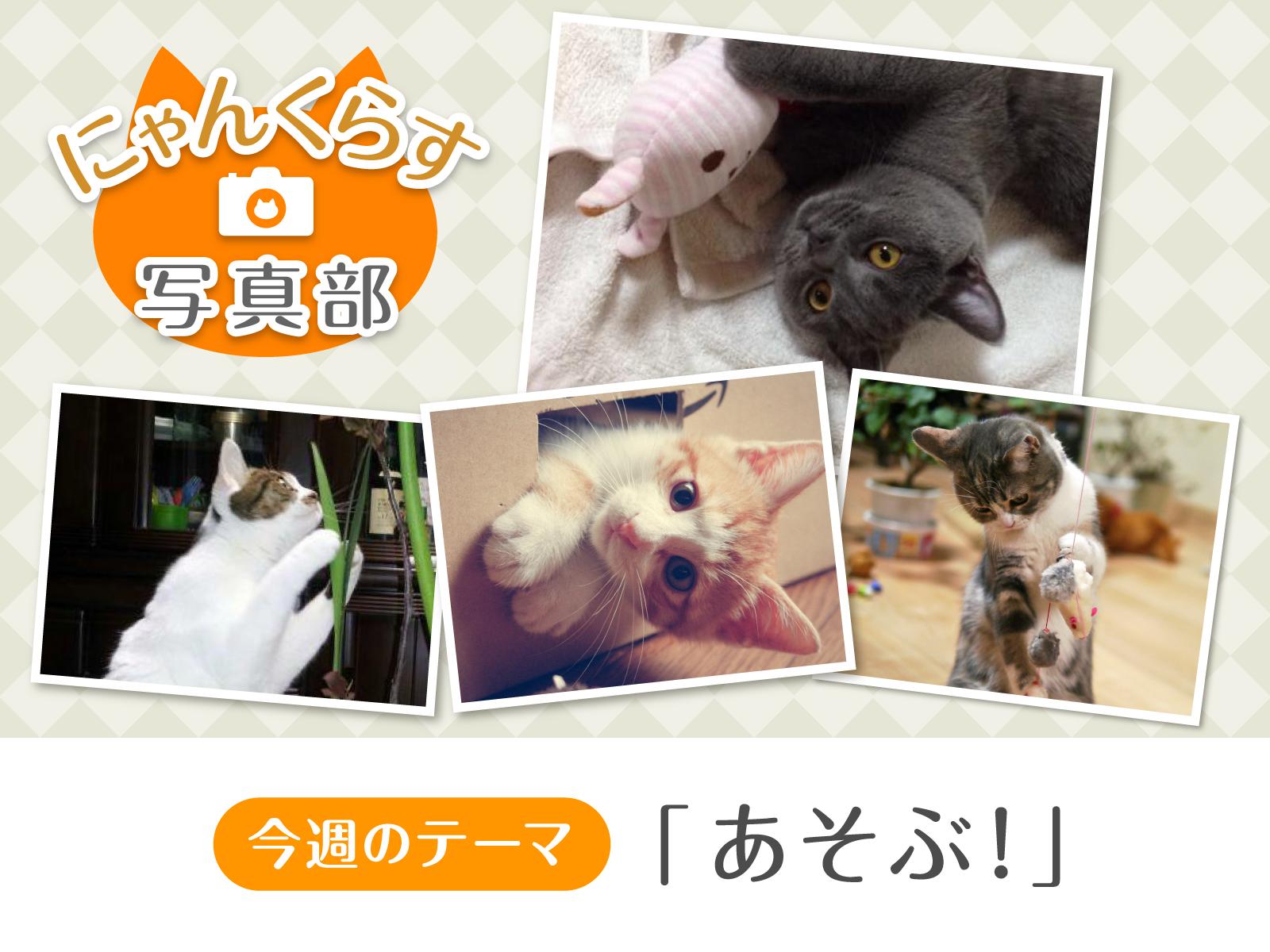 [ にゃんくらす写真部 ]「あそぶ!」写真コンテスト結果発表!