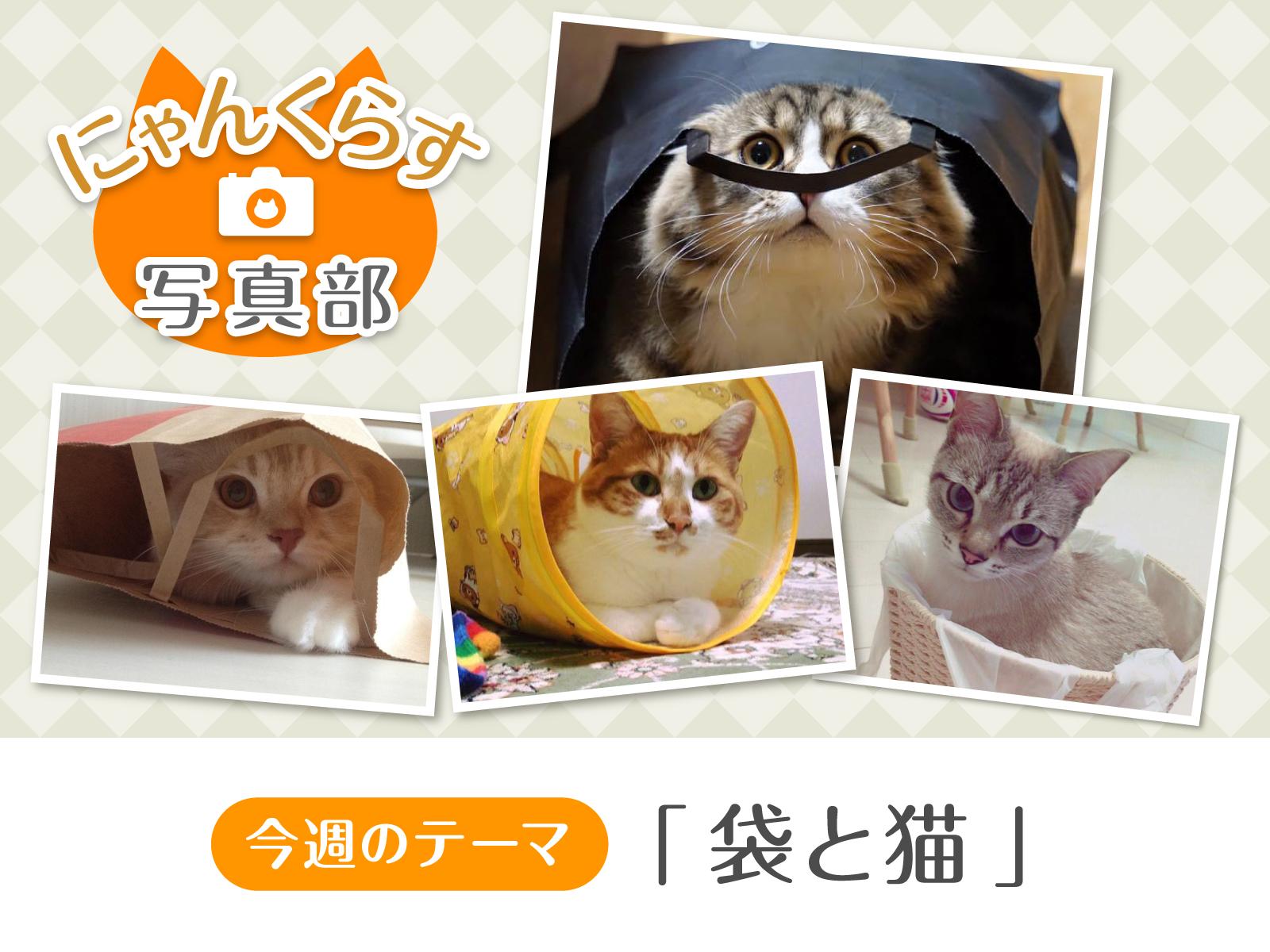 [ にゃんくらす写真部 ]「袋と猫」写真コンテスト結果発表!